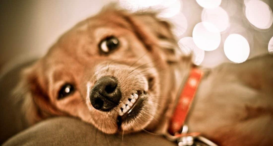 אני נראה לכם מצחיק?