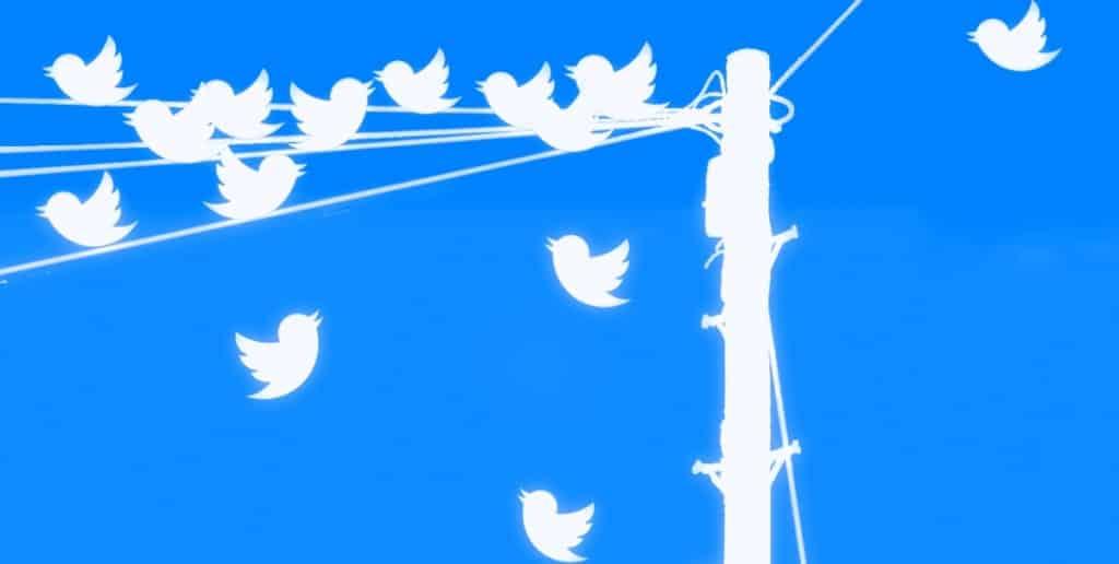 טוויטרים ליד עמוד חשמל