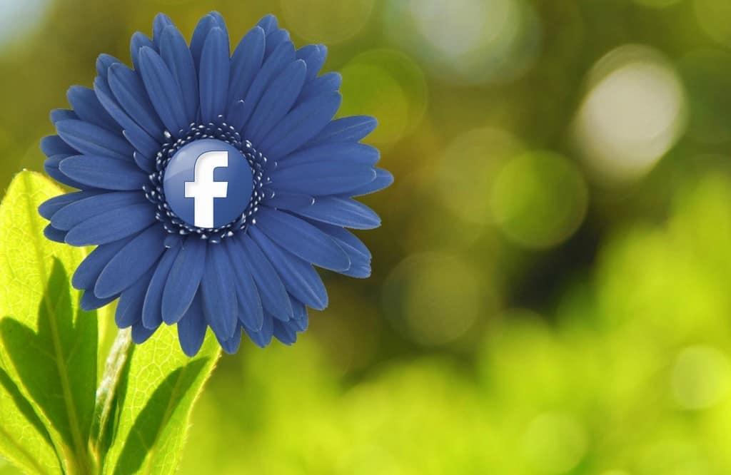 פרח פייסבוק
