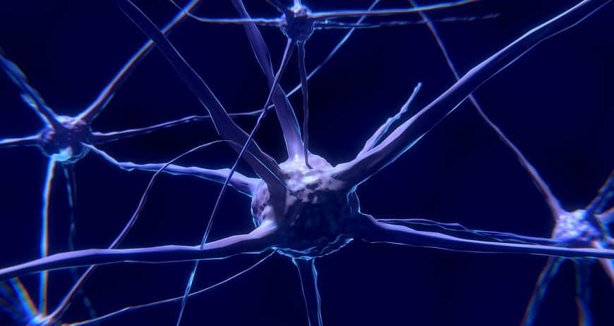תאי עצב
