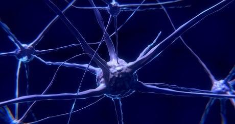 תאי עצב - עותק