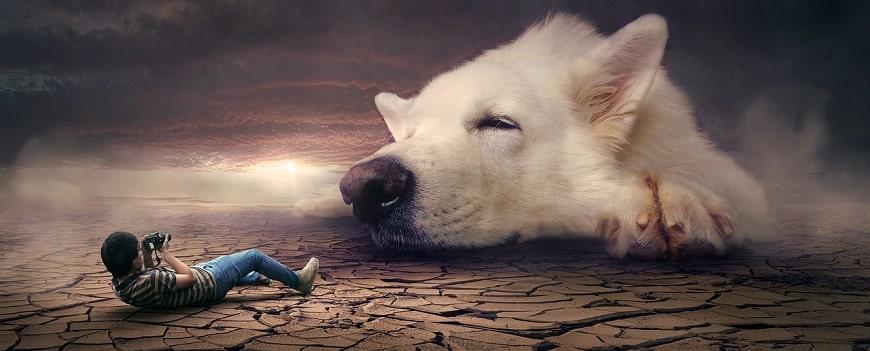 פנטזיה - ילד מצלם כלב ענק