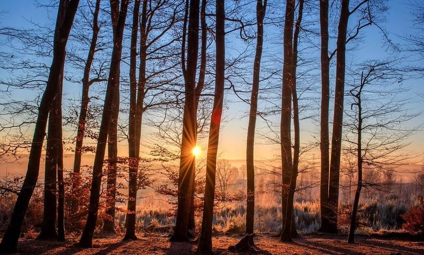 זריחה-ביער